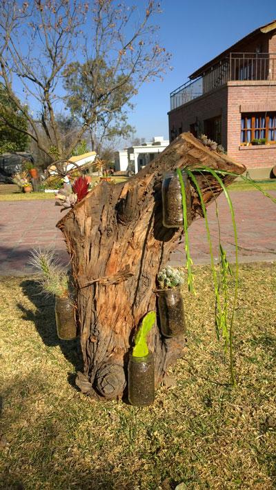 jardin-vertical-de-cactus-y-suculentas