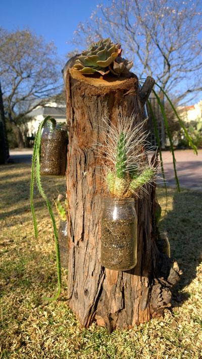jardin-vertical-de-suculentas-y-cactus