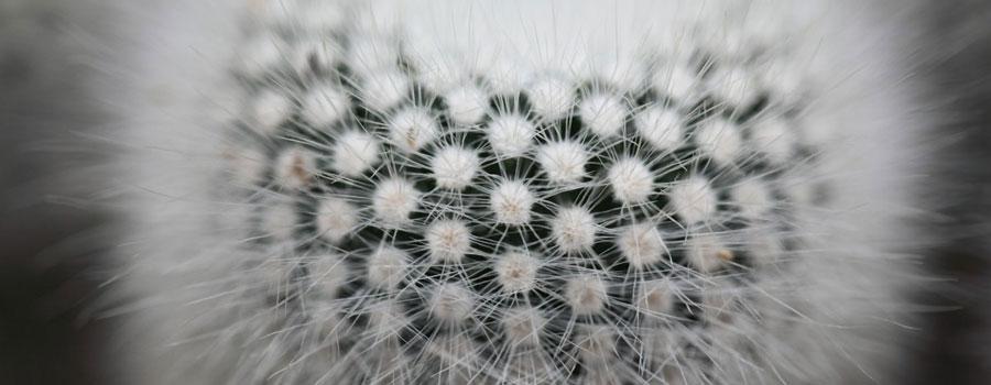 espinas cactus