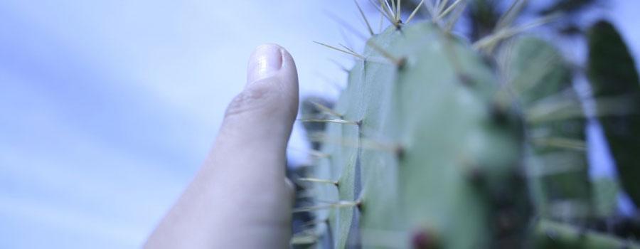 espinas-de-cactus