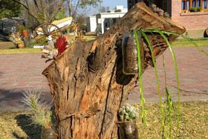 jardin vertical de suculentas y cactus