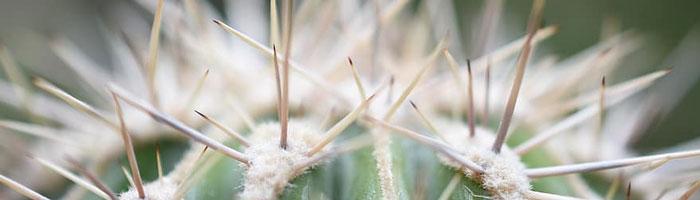 espinas-cactus
